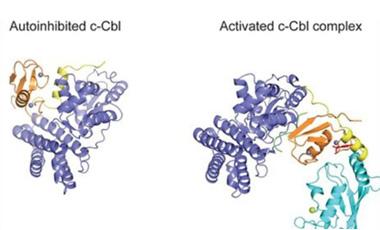 Πρωτεΐνη καρκίνου σε 3D | vita.gr