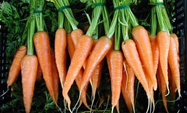 Τα καρότα μάς κάνουν σέξι   vita.gr