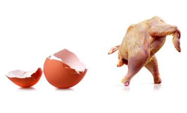 Κοτόπουλα που δεν μεταδίδουν τη γρίπη   vita.gr