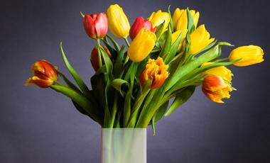 Θα ήθελα να μάθω πως μπορούν να κρατήσουν περισσότερο τα λουλούδια στο βάζο; | vita.gr
