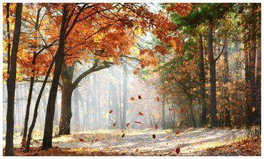 Τα δάση της μεσογείου κινδυνεύουν | vita.gr