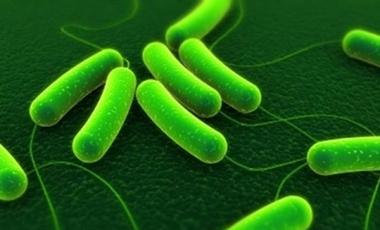 Τα μικρόβια θα μας κάνουν αιωνόβιους | vita.gr