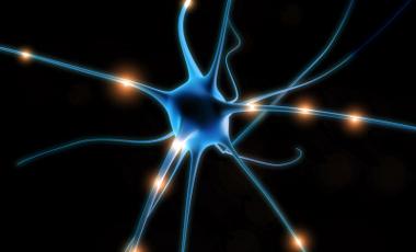 Δέρμα μεταμορφώνεται σε νευρώνες | vita.gr