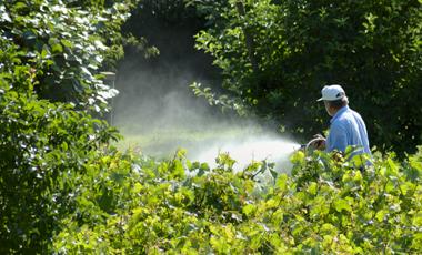 Επικίνδυνα φυτοφάρμακα στις ΗΠΑ | vita.gr