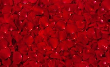 Ποια είναι η ημερομηνία λήξης του αίματος; | vita.gr