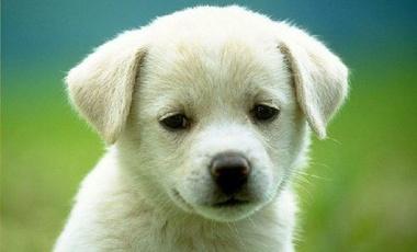 Μπορούν οι σκύλοι να διαβάζουν τη σκέψη μας; | vita.gr