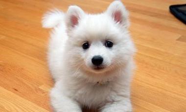Ο σκύλος είναι λίγο… αλεπού | vita.gr