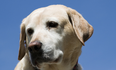 Τα σκυλιά διώχνουν τις αλλεργίες | vita.gr