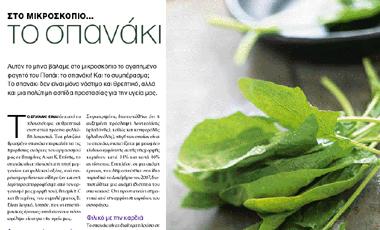 Στο μικροσκόπιο… Το σπανάκι | vita.gr