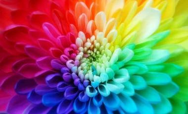 Βαρόμετρο στα αντικαρκινικά χρώματα | vita.gr
