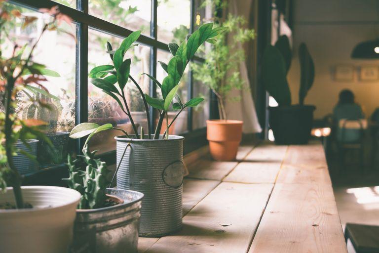 Επενδύστε σε φυτά εσωτερικού χώρου | vita.gr