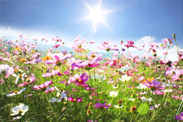 «Μυρίζει» καλοκαίρι με σταδιακή άνοδο της θερμοκρασίας | vita.gr