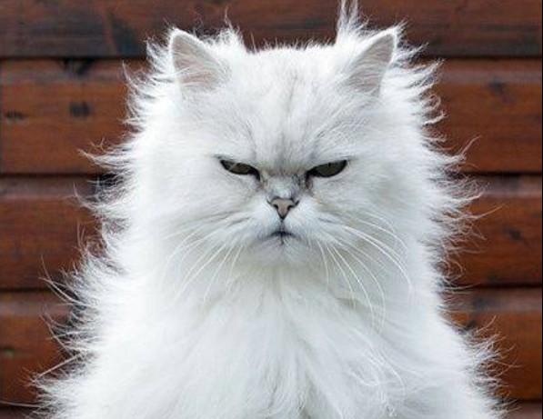 Ποια ζώδια μπορούν να σε «τρελάνουν» | vita.gr
