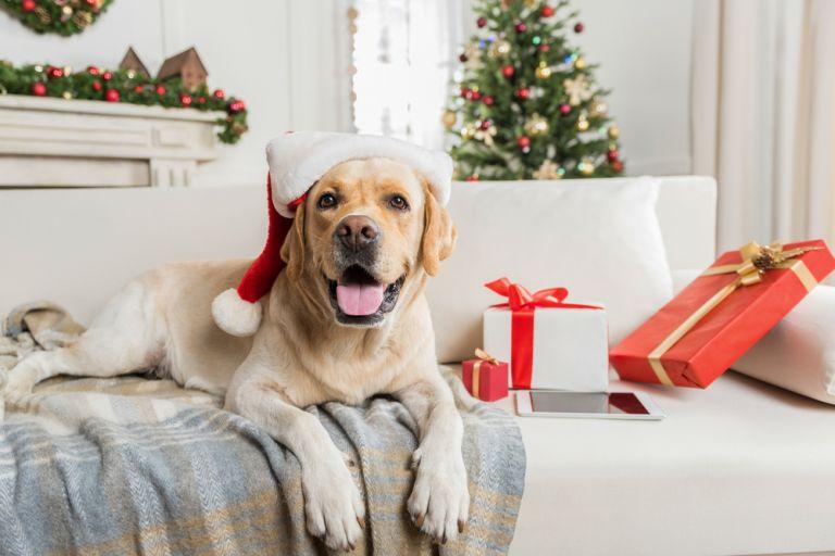 Μέσα στο μυαλό του σκύλου μας | vita.gr