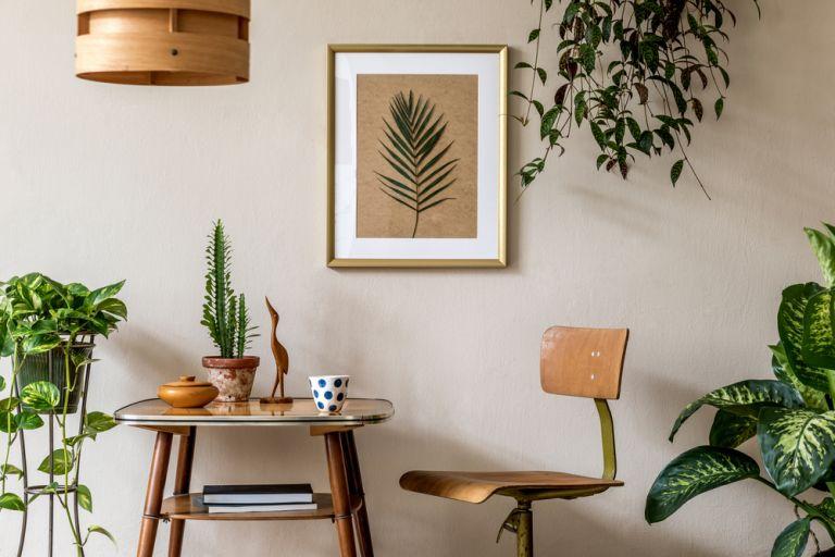 Πώς θα φροντίσετε τα φυτά εσωτερικού χώρου | vita.gr