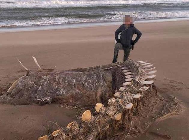 Τεράστιος σκελετός ξεβράστηκε σε παραλία στη Σκωτία – Είναι το τέρας του Λοχ Νες; | vita.gr