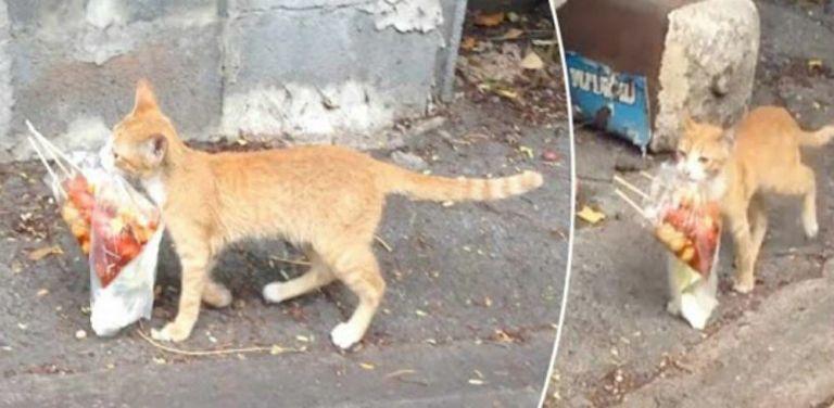 Γάτα σε ρόλο… ντελίβερι – Το αστείο βίντεο   vita.gr