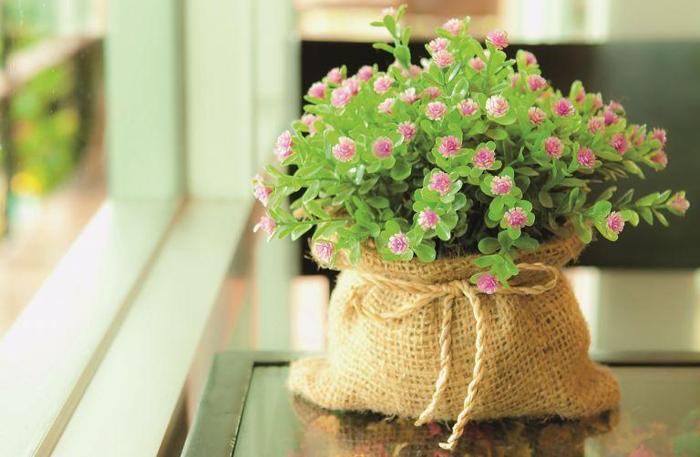 Έτσι θα καταλάβετε αν τα φυτά σας θέλουν πότισμα | vita.gr