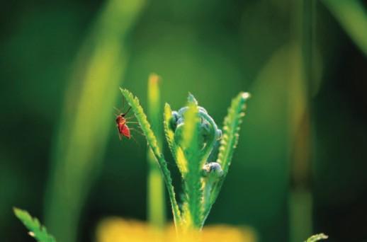 Πώς θα κερδίσετε την μάχη με τα κουνούπια | vita.gr