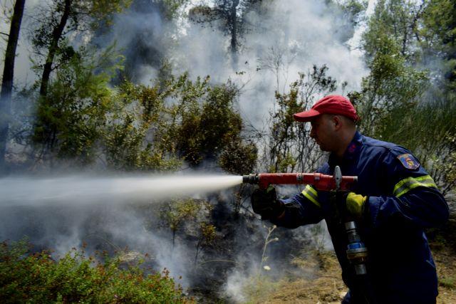Σε εξέλιξη η φωτιά στις Κεχριές – Οριοθετήθηκε το μέτωπο στο Γραμματικό   vita.gr