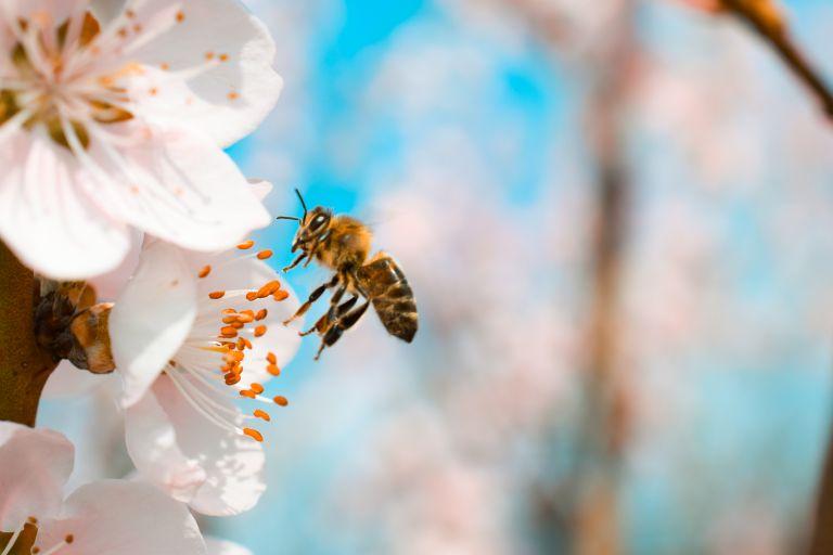 Τσίμπημα από μέλισσα: Πώς να το φροντίσετε | vita.gr