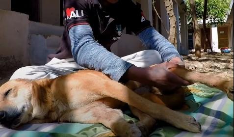H στιγμή που ένα αδέσποτο παράλυτο σκυλάκι καταφέρνει να περπατήσει ξανά | vita.gr