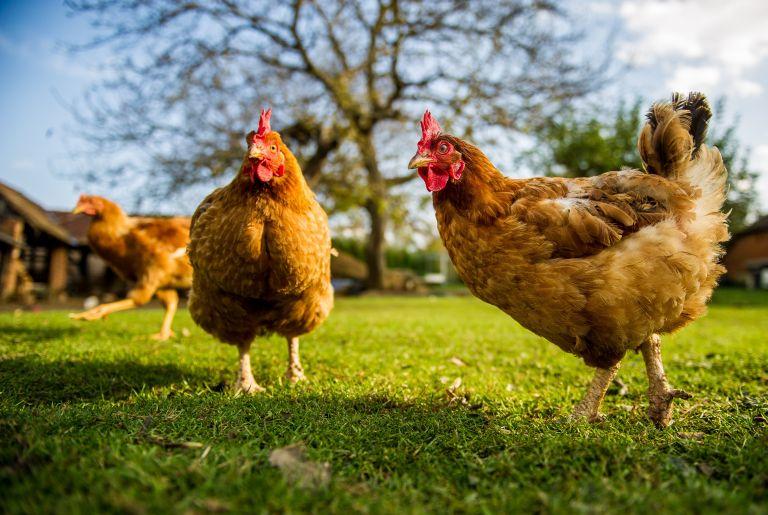 Προειδοποίηση της ΕΕ για ξεσπάσματα γρίπης των πτηνών | vita.gr