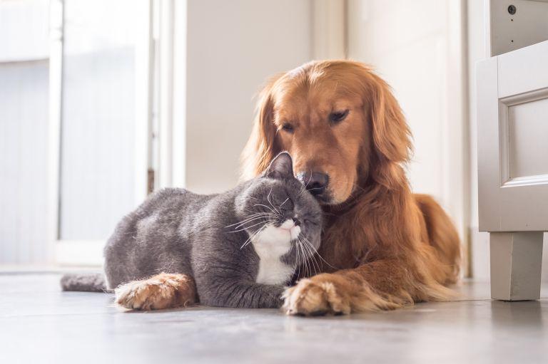 Νέα μελέτη: Οι γάτες μεταδίδουν μεταξύ τους τον κοροναϊό, οι σκύλοι όχι | vita.gr