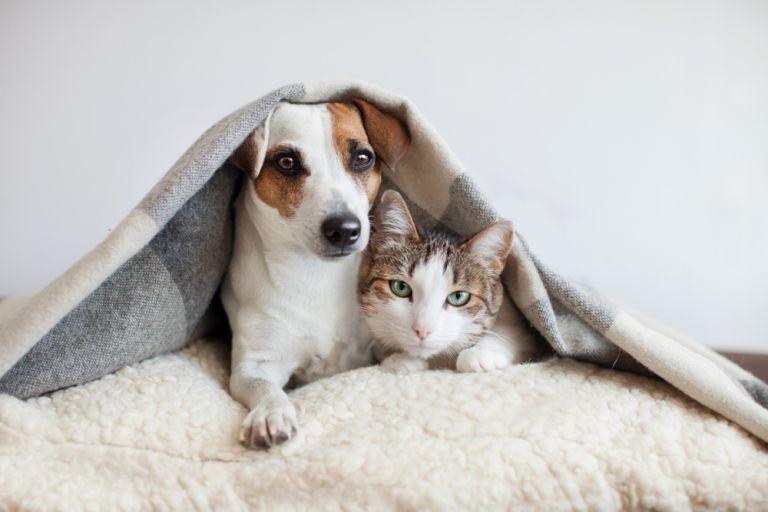 Lockdown: Οι συμβουλές των κτηνιάτρων για την προστασία των κατοικίδιων ζώων | vita.gr