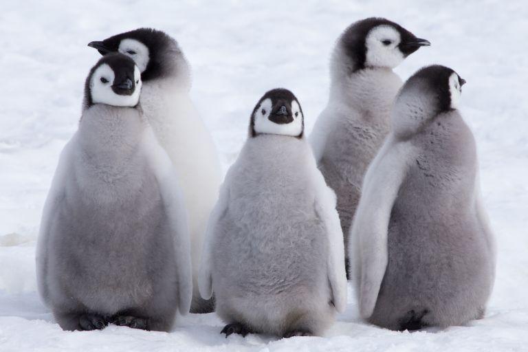 Το βίντεο του πιο αξιολάτρευτου πιγκουίνου | vita.gr