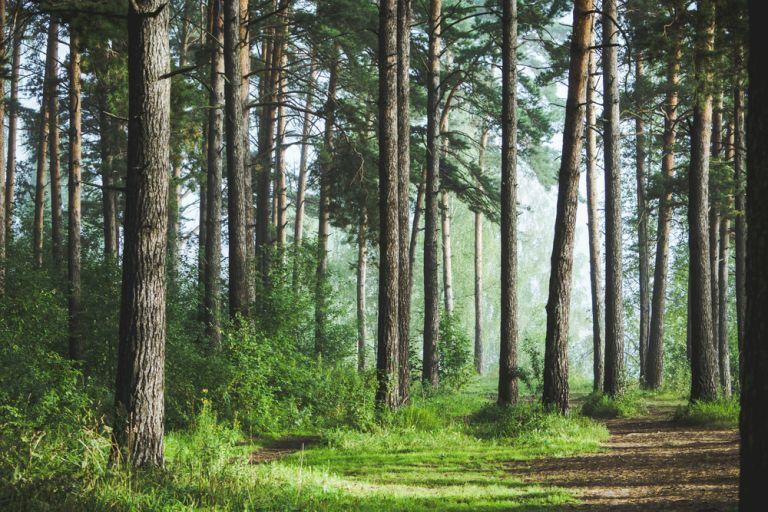 Το περιβάλλον «ανάσανε» μέσα στην πανδημία | vita.gr