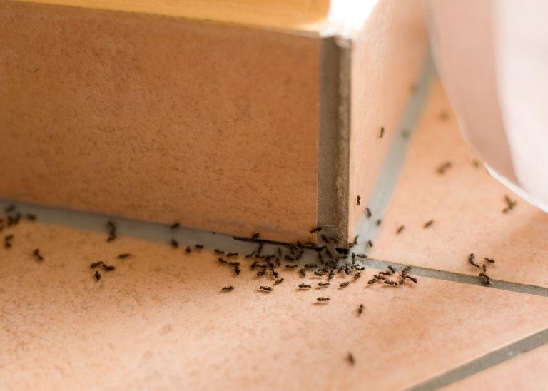 Ετσι θα διώξετε τα μυρμήγκια από το σπίτι μια και καλή | vita.gr