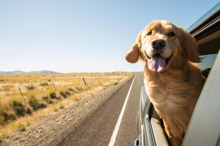 Διακοπές με το σκυλάκι σας; Αυτά θα χρειαστείτε | vita.gr