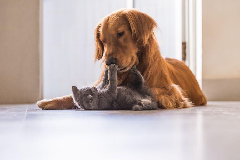 Θα λιώσετε: Σκύλος «υιοθέτησε» επτά ορφανά γατάκια   vita.gr